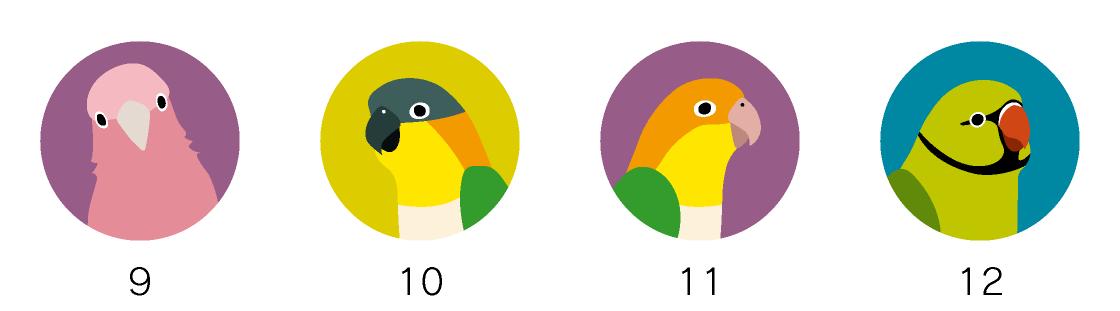 マグネットデザイン 鳥の種類オウム